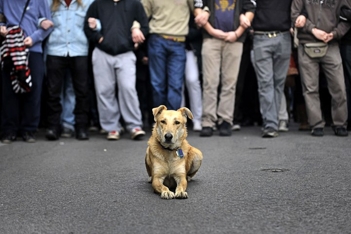 loukanikos-greece-riot-dog.jpg